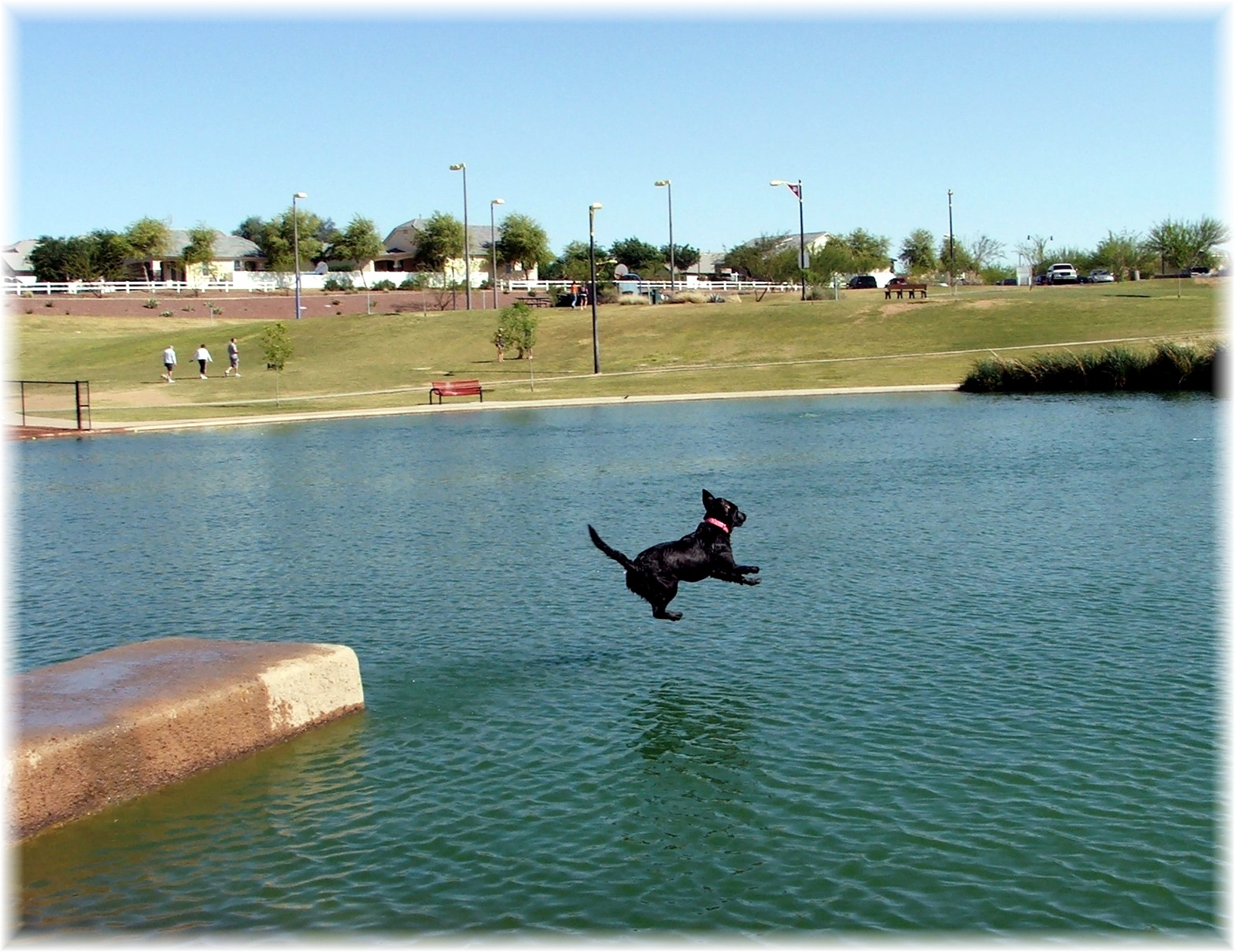 dog-jumping-into-water