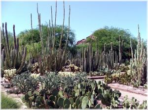 Phoenix Arizona Waterfront Homes